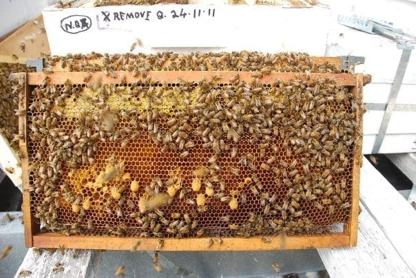 Beehive Centre