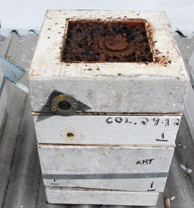 Carbonarias bees propagate 1 box top open