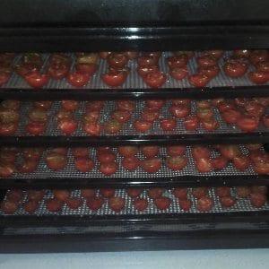 Cherry Tomatoes Excalibur Racks