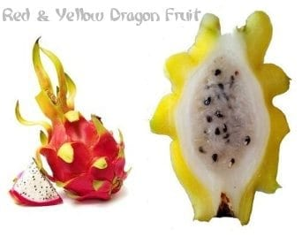 Red and yellow dragon fruit
