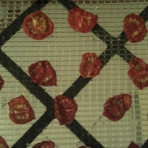 Dried Cherry Tomatoes on Tray