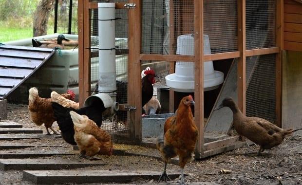 Feeders chicken PVC feeder tube hens ducks different feeders
