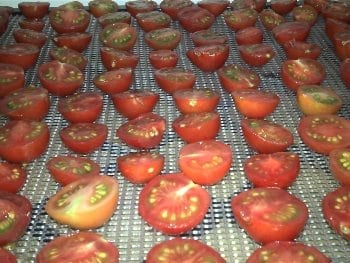 Tomatoes on Excalibur Tray