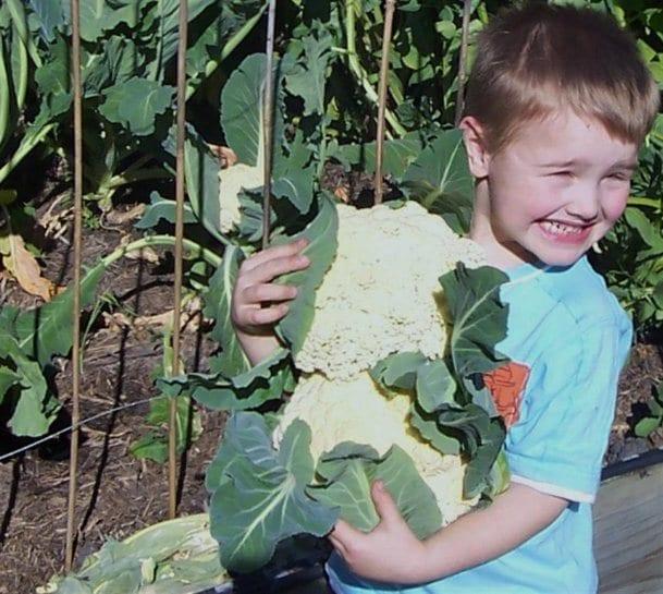 Holding cauliflowers
