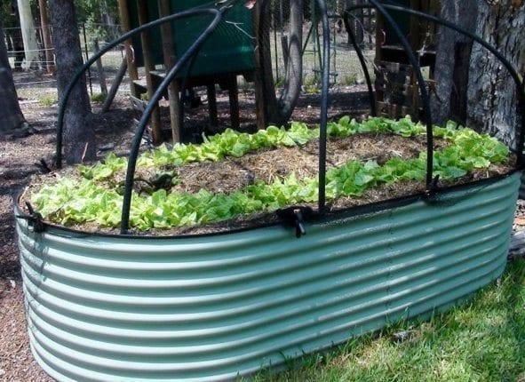 Lettuce Border Around Raised Bed Play Gym