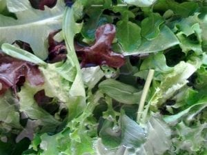Lettuce Mix Washed