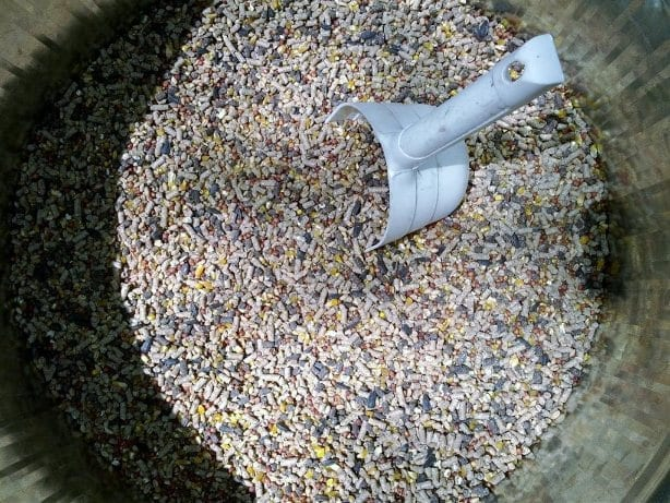 Chicken Feed Mix of pellets and whole grain