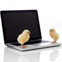 Chicks on a PC