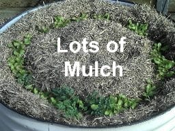 Lots of Mulch in raised garden bed