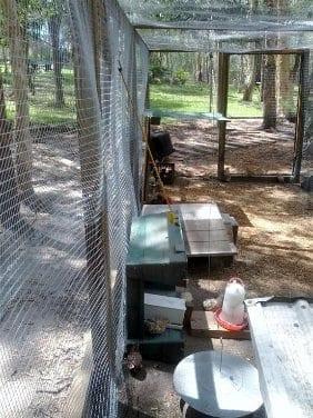 Quail Run Feeding Stations
