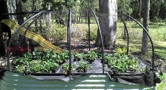 Netting Over Strawberry Raised Bed