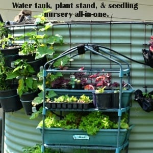 Water tank also plant and seedling stand all in one