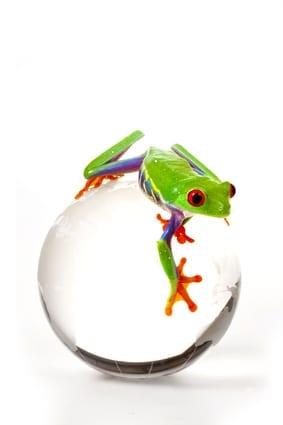 World environment frog