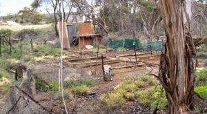 bush vegetable garden raised beds