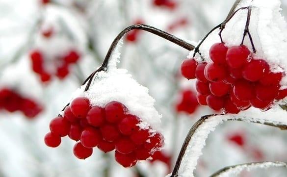 frozen berries not nannas