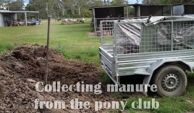 collecting horse manure with trailer from pony club