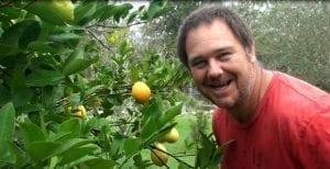Meyer lemon tree with lemons