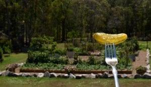 pickle on fork vegetable garden in background good 620