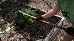 preping garden bed with hoe