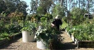 stand up gardening vegetables raised garden beds