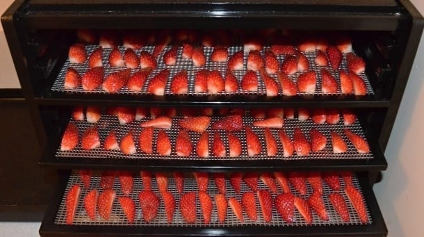 strawberries quartered and drying in excalibur dehydrator