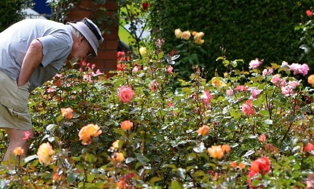 allow time to smell the roses in life