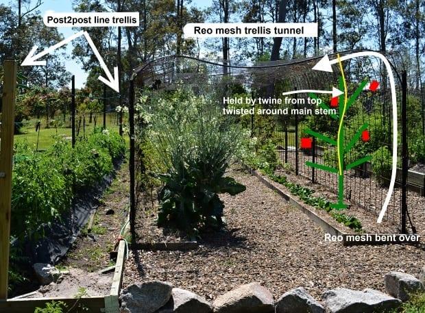 example of post tomato trellis and reo mesh