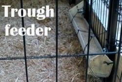 trough feeder for chickens or poultry