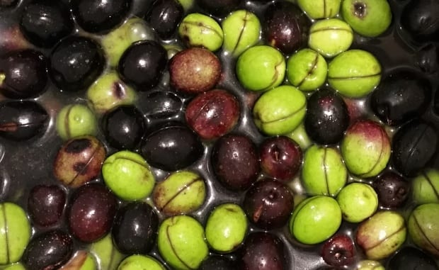 Our own fermented olives