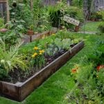 Self Sufficiency- What is it & how to get started