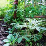 The Dynamic Gardening Method