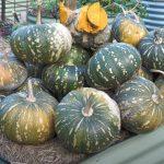 How to Grow a TON of Pumpkins!