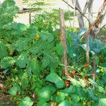 Permaculture For Beginners (part 1)